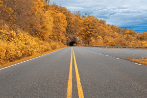 Road with orange fall trees