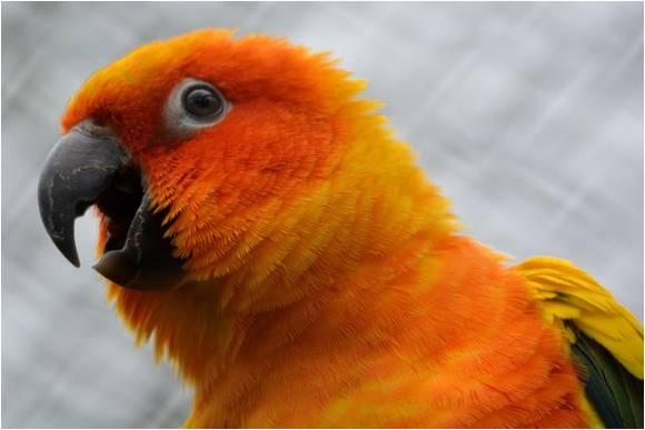 Lifetime Value parrot