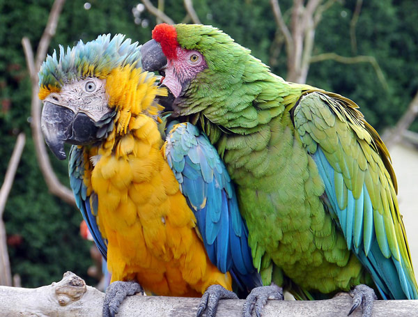 macaws4web