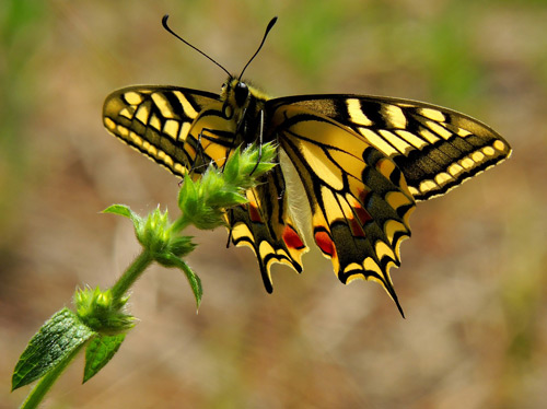 remarketing strategy butterfly